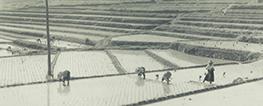 農業災害補償制度70周年